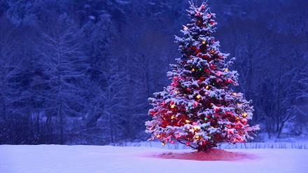 Immagini Auguri di Natale più belle, sim