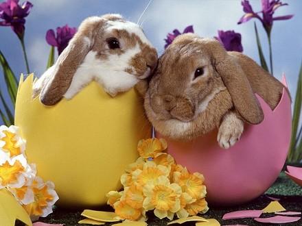 Frasi, immagini Auguri Buona Pasqua dive
