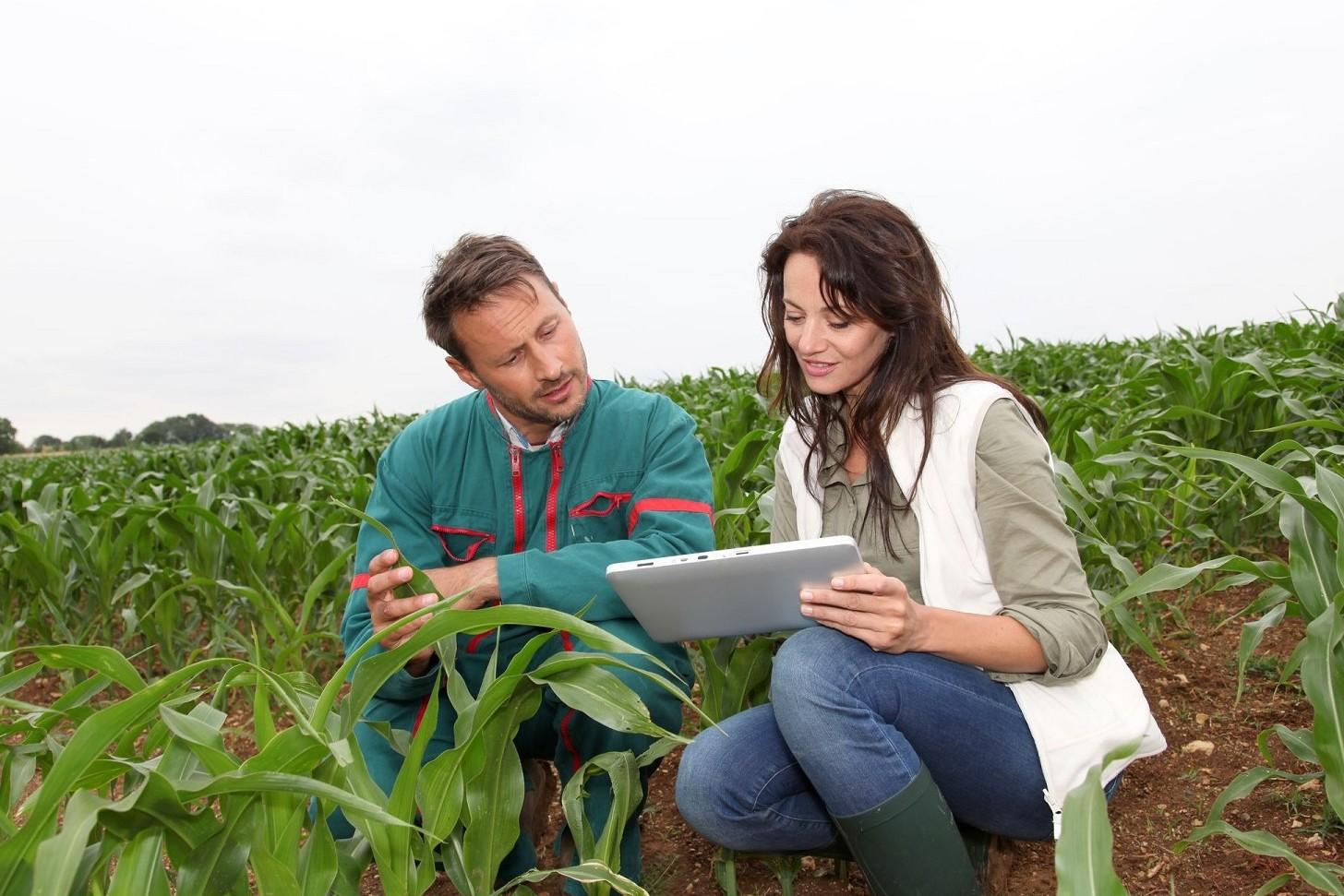 Imprese agroalimentari in Italia e nel S