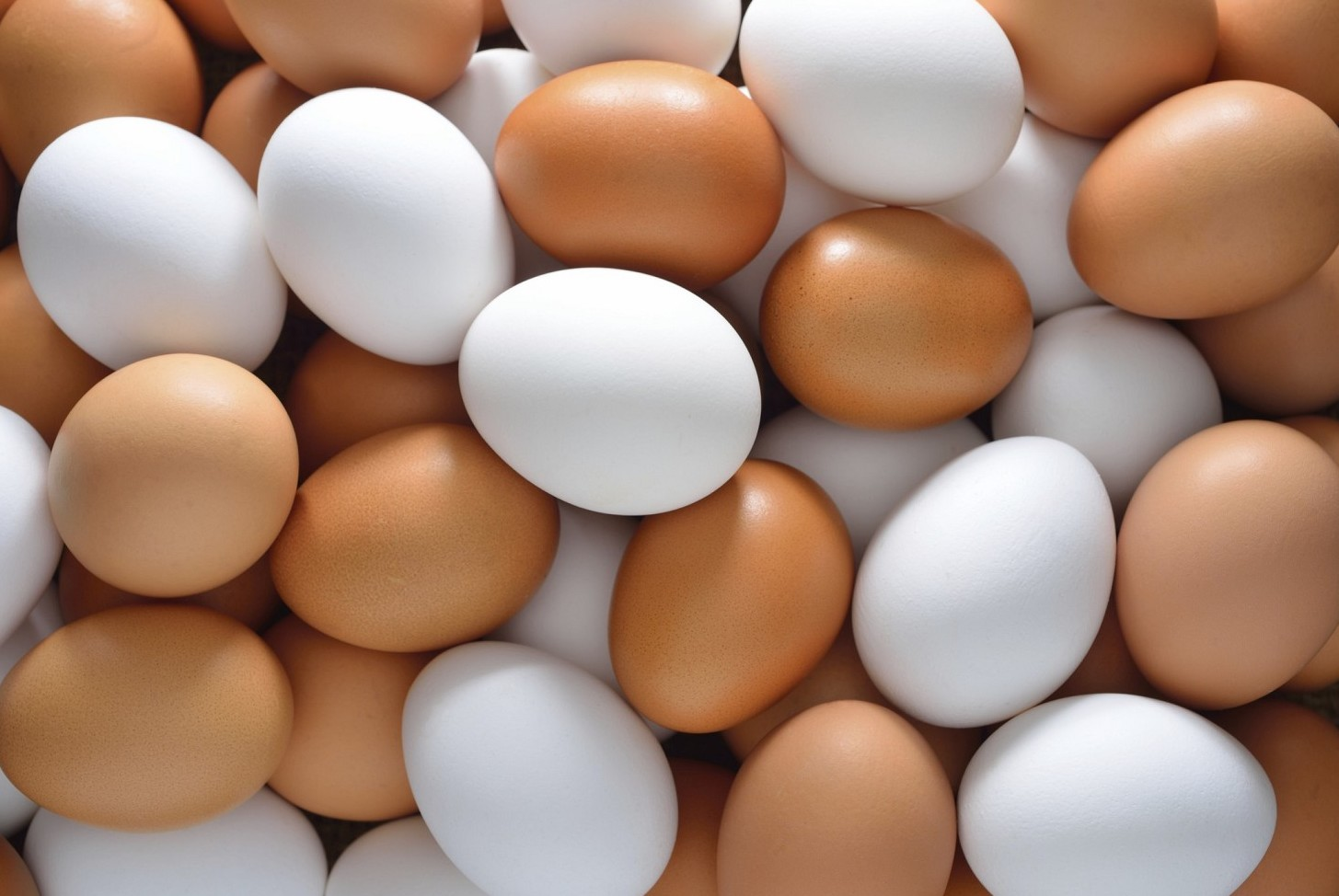 Uova contaminate e carni di pollo infett